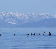 冬の夜の琵琶湖おかっぱりにおすすめのルアー7選